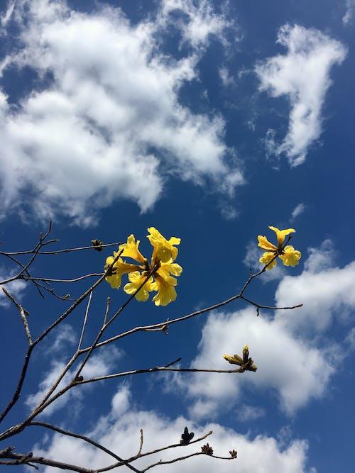 Free stock photo of blue sky, flowers, spring