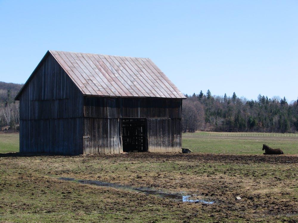 Free stock photo of farm, field, horse