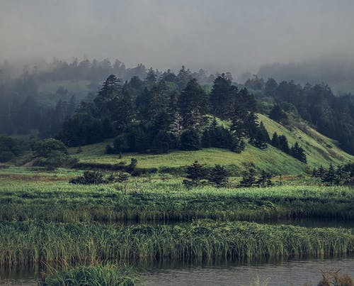 Hilly terrain with evergreen trees on lake shore on foggy day
