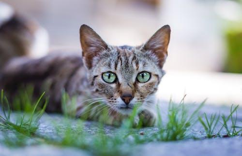 Immagine gratuita di alla ricerca, animale, animale domestico, baffi