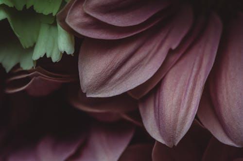 Free stock photo of artistic, detail, detail shot