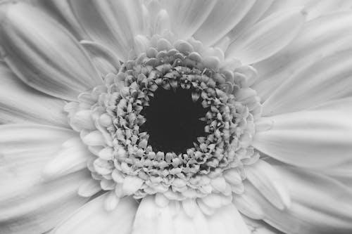 Free stock photo of center, flower