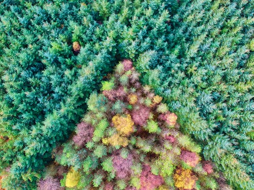 Free stock photo of aerial photo, autumn colors, autumn leaves
