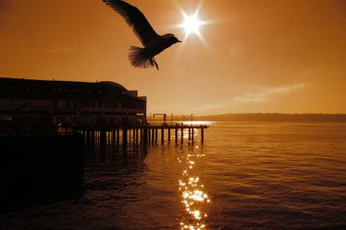 Free stock photo of Bird Seagull Fly Sun Water Ocean Dock