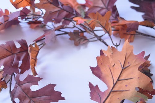 Free stock photo of fall leaves, shadows, white background