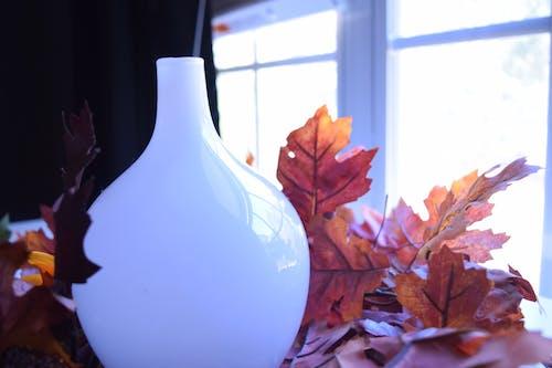 Free stock photo of vase, white