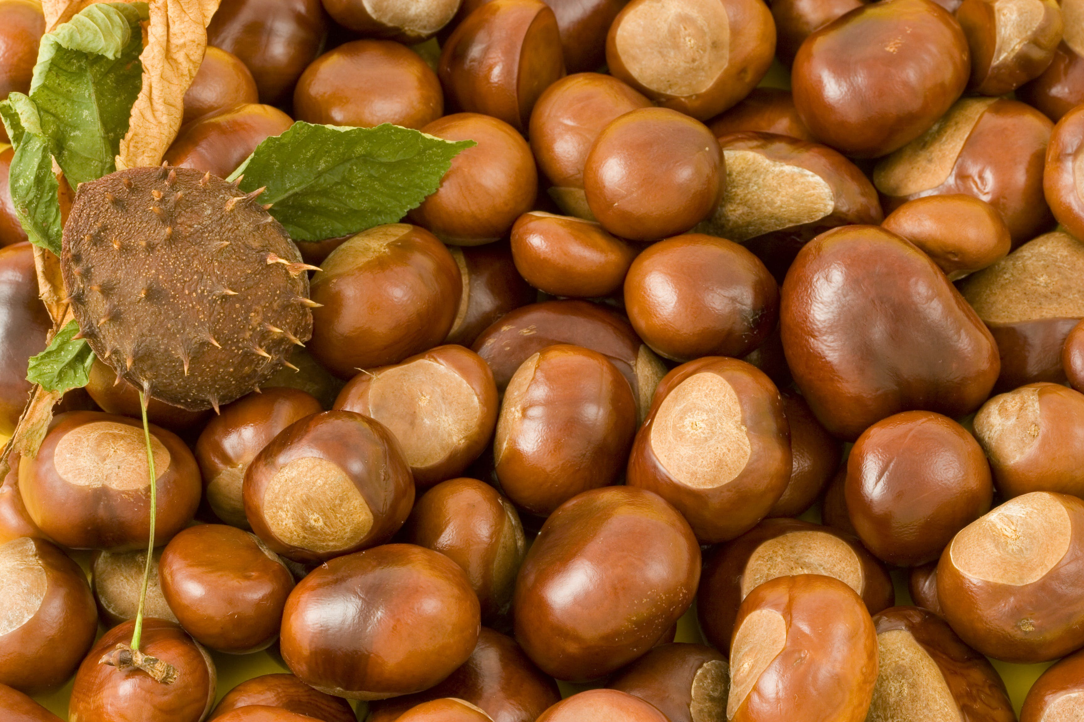 Free stock photo of food, brown, nuts, snack