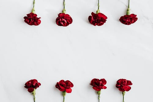 Top view of elegant dark red carnations arrangement on white marble surface in studio