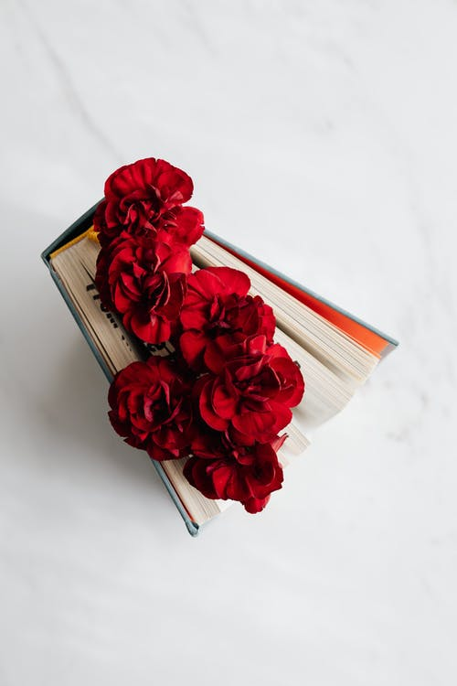 From above of open book with vivid red flowers between pages standing on white marble surface in soft daylight