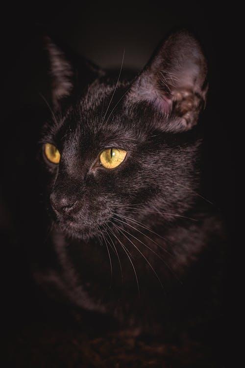 Free stock photo of animal, animals, cat