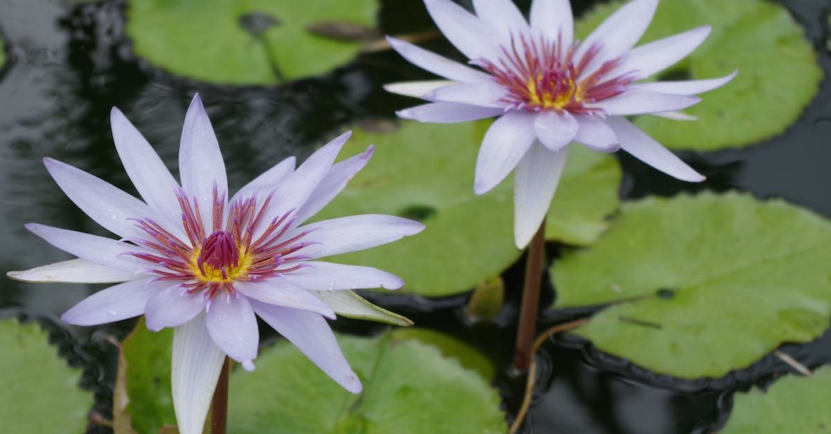 Free stock photo of lily pond, pond, tropical