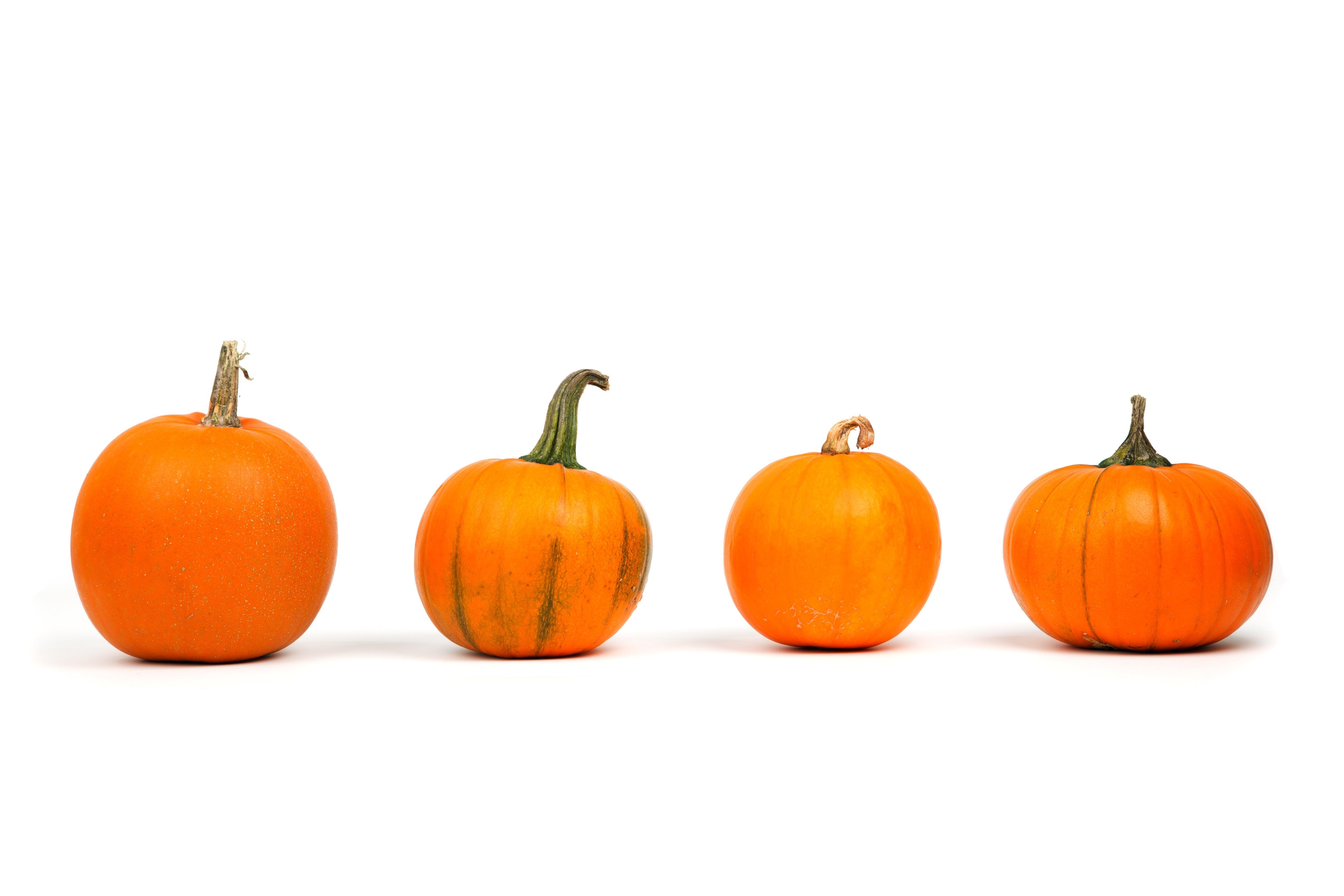 Ilmainen kuvapankkikuva tunnisteilla appelsiini, herkullista, kausiluonteinen, kurpitsa