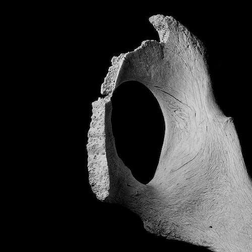 Old dry rough bone on black background