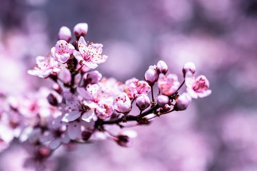 Bright blooming tree branch with small blooming flowers with delicate petals on blurred background