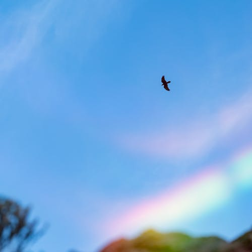Bird flying in blue sky with rainbow