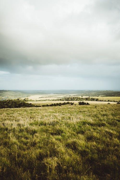 Green Grass Field Near Body of Water Under White Clouds