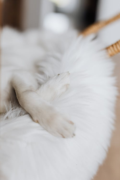 White dog paws on fluffy cozy bed