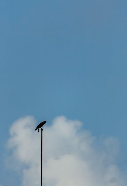 Free stock photo of alone, animal, avian, bird