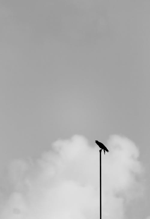 Free stock photo of animal, avian, bird, black
