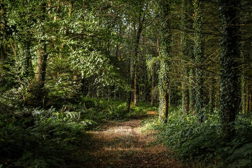 Foto d'estoc gratuïta de a l'aire lliure, arbre, bosc, boscos