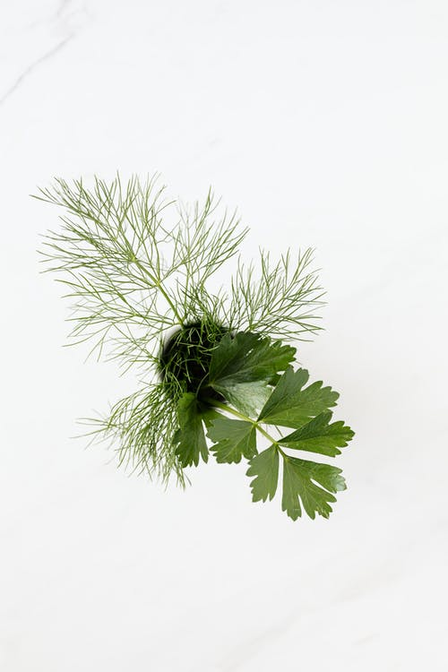 Dill and parsley sprigs in cup on marble surface
