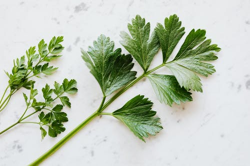 Top view of natural green composition with parsley branches placed on white table with grey dots ingredient preparing for cooking