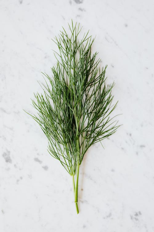 Bunch of fresh dill placed on table