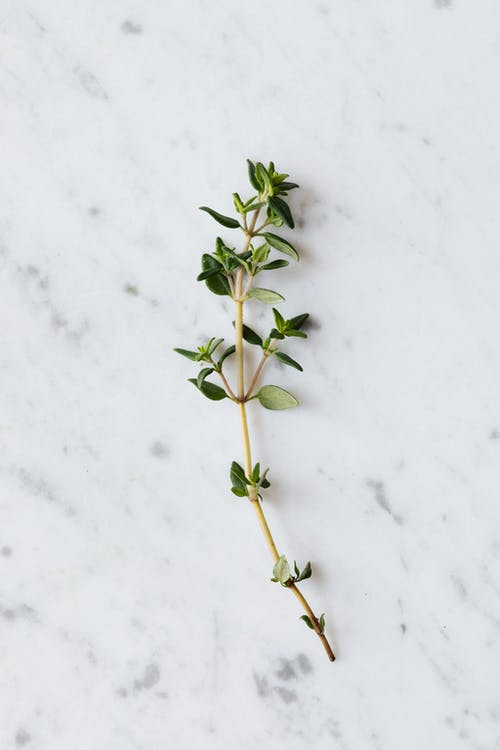 Green bunch of thyme on white table