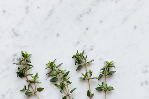 Green thyme on white table in kitchen