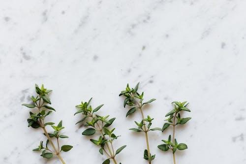 Fotos de stock gratuitas de aroma, aromático, arreglo