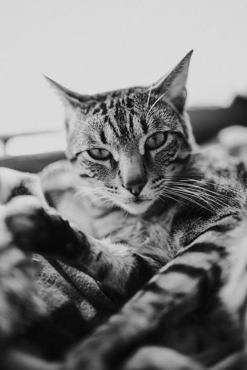 Kostenloses Stock Foto zu auge, baby, bigode de gato, gato