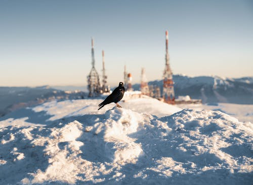 Black Bird on Snow Covered Ground