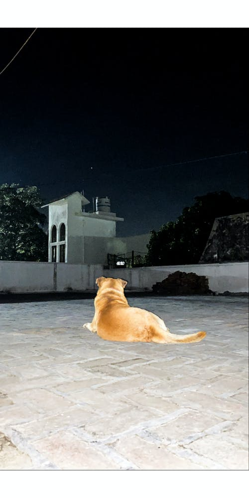 Free stock photo of #mobilechallenge, #outdoorchallenge, animal lover, brown dog