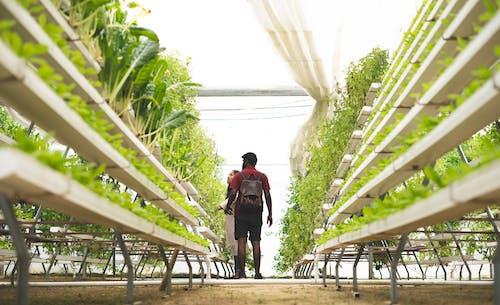 Gratis lagerfoto af gård, grøn, grøntsager, hvid baggrund