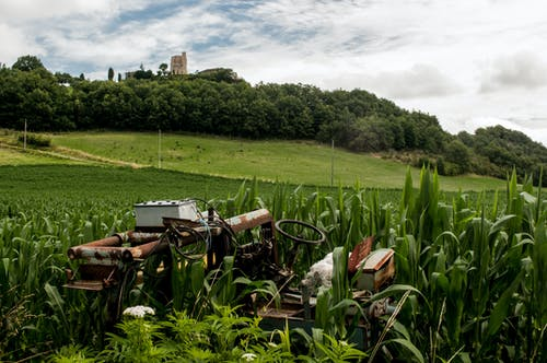 Rusted Tractor in Middle of Plants