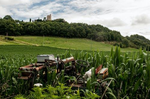 Kostnadsfri bild av bondgård, fält, rost, traktor