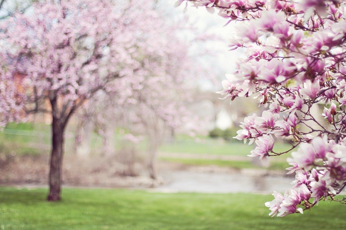 Imagine de stoc gratuită din anotimp, apple, arbore