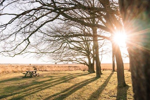Imagine de stoc gratuită din arbore, arc, armonie