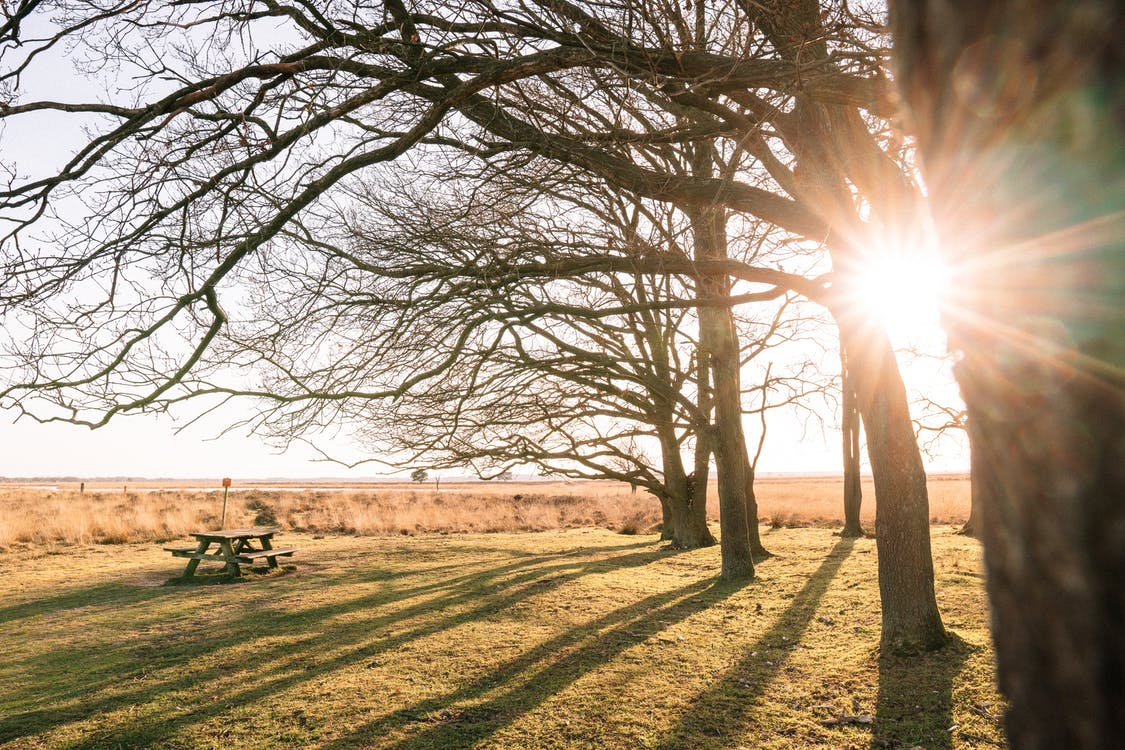 Leafless trees and wooden table on meadow in countryside