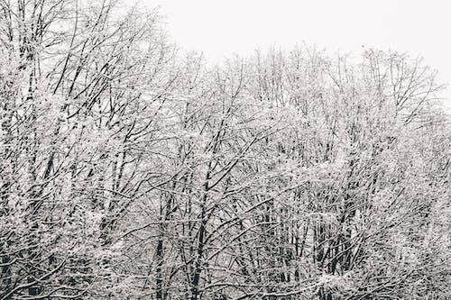 アイス, コールド, シーズン, パターンの無料の写真素材