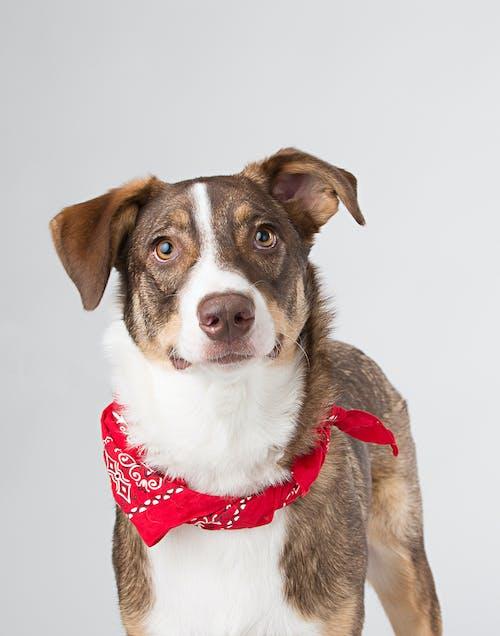 Fotos de stock gratuitas de adorable, animal, bandana