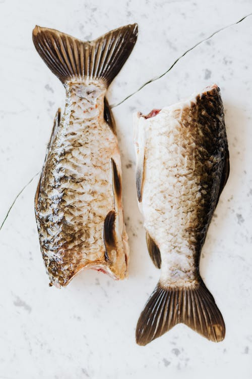 Photo of Two Raw Fish