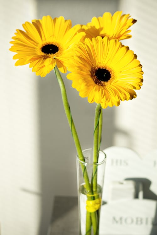 Yellow Sunflowers in Clear Glass Vase