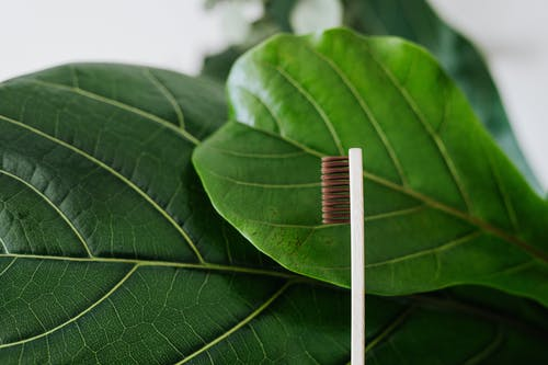 Toothbrush Near Green Leaves