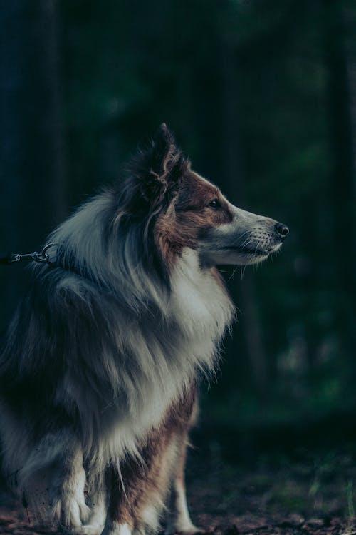 Photo of Long Coated Dog