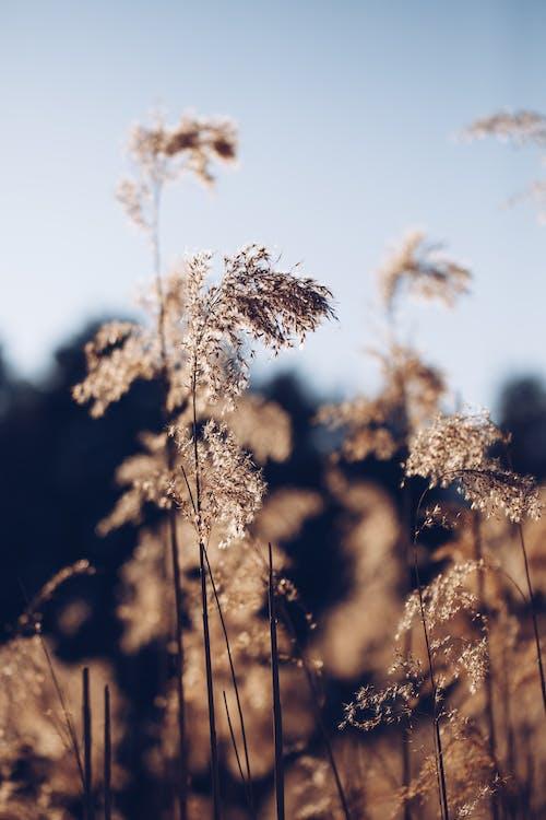Brown Plant Under Blue Sky