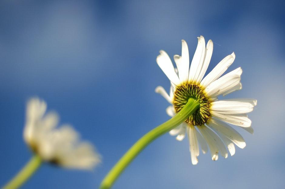 blur, botany, flower