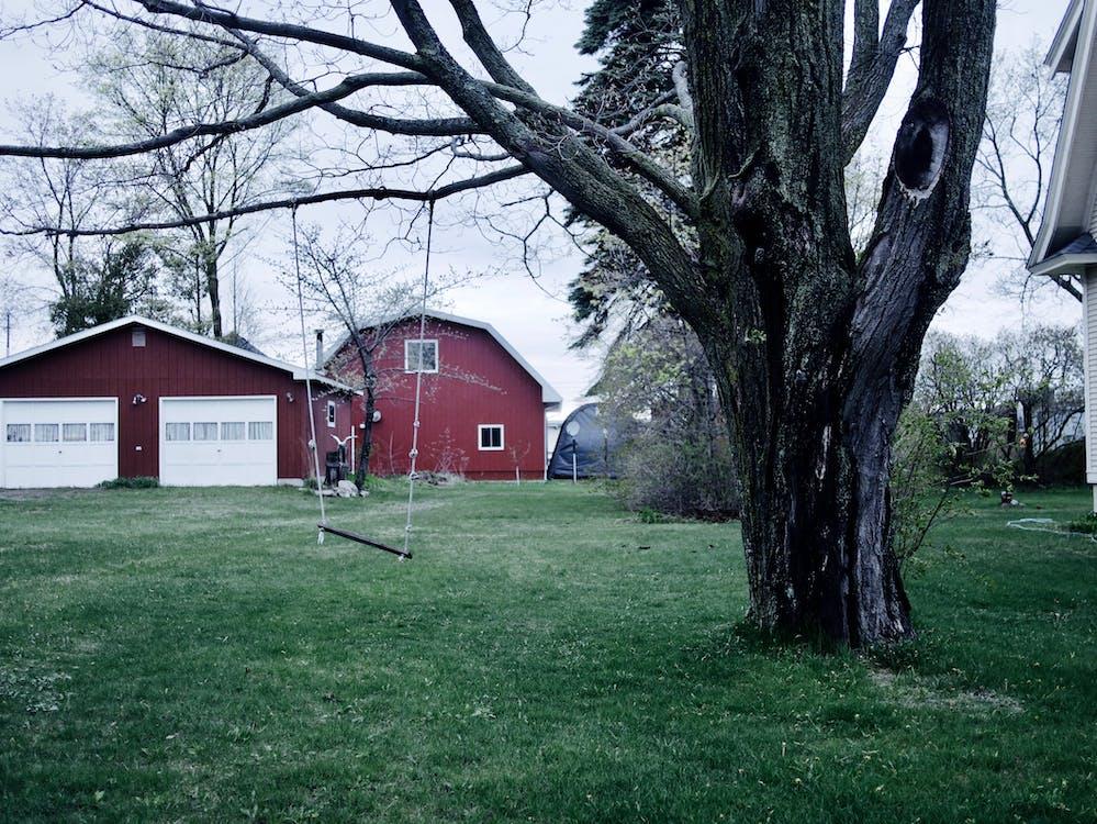 Ilmainen kuvapankkikuva tunnisteilla keinu, piha, puu