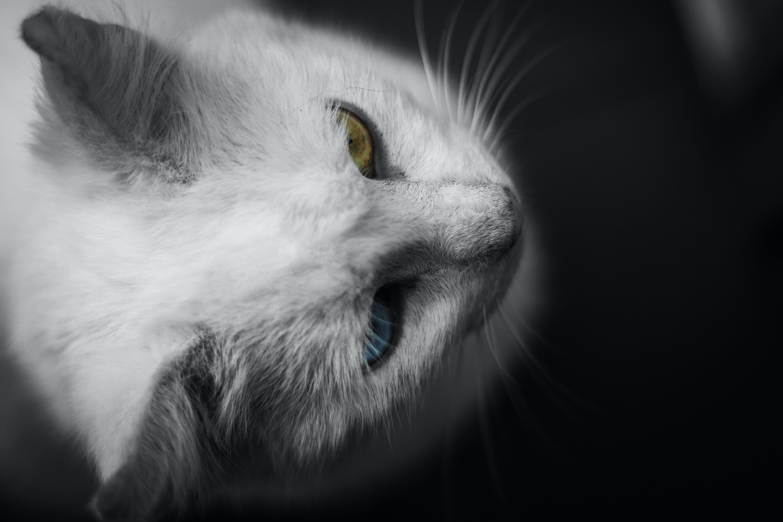 White Cat on Black Background