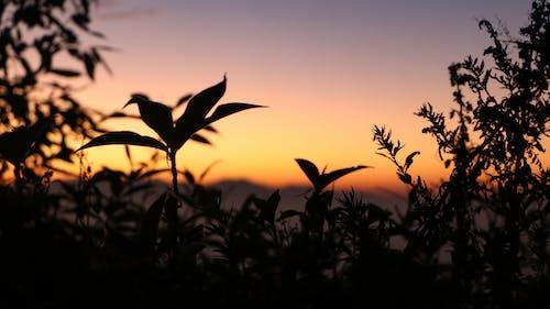 Free stock photo of Beautiful sunset, dramatic sky, dusk
